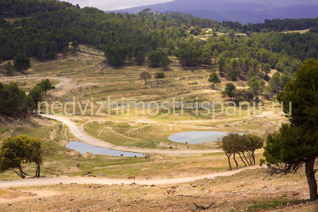 Сафари парк Айтана в Испании