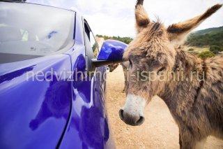 Пони в сафари парке Айтана в Испнаии