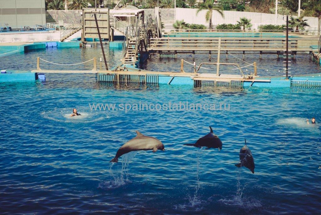 Океанариум Валенсии, Испания. Шоу дельфинов