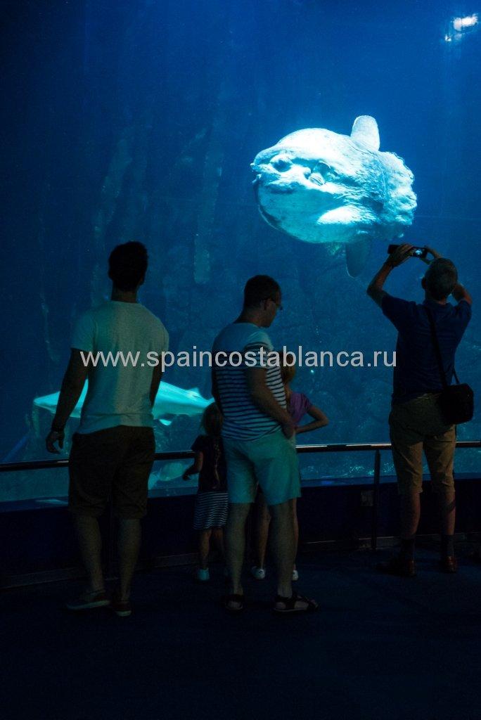Океанариум в Валенсии, Испания. Рыба-луна