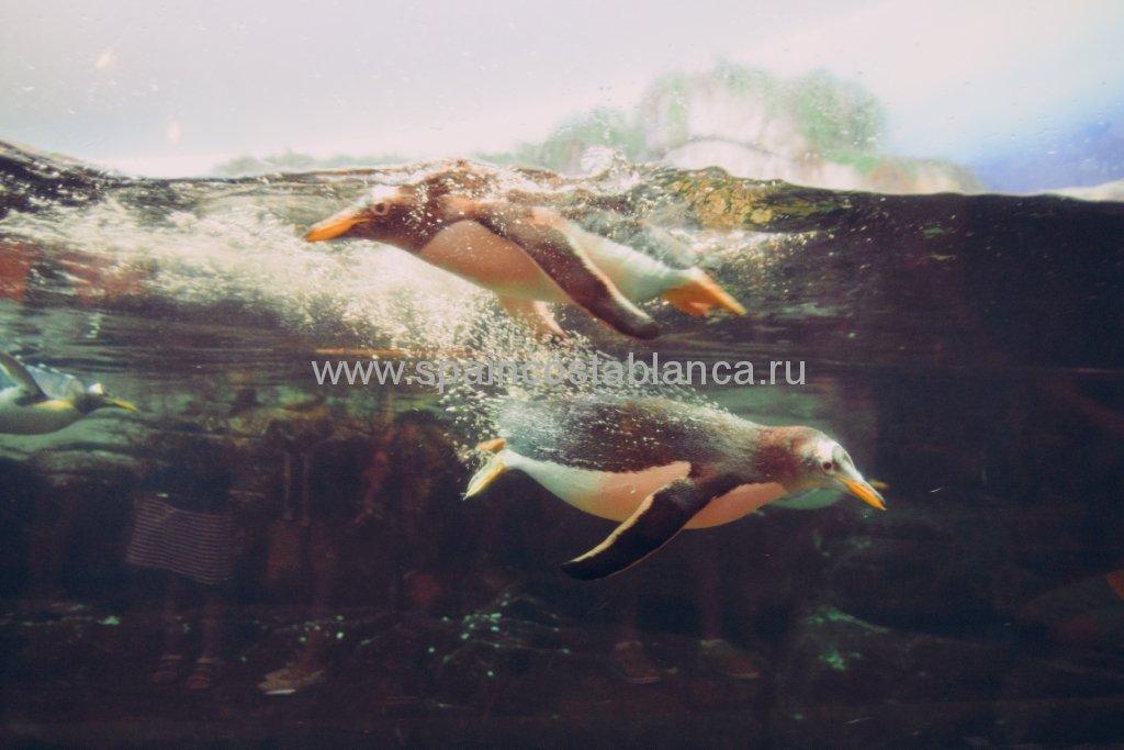 Пингвины в Океанариуме Валенсии, Испания
