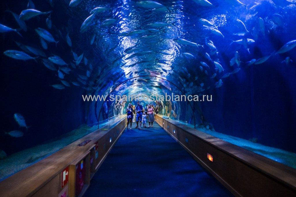 Стеклянный тоннель под аквариумом в валенсийском Океанографике, Испания.